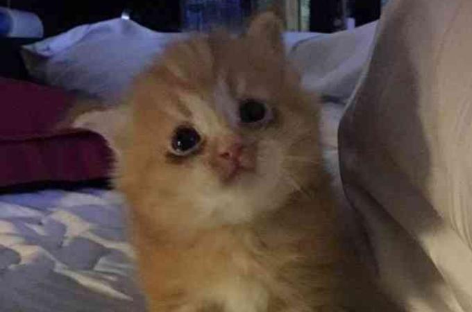 突然飼い主と暮らせなくなった猫親子。その後、新しい家での生活に慣れすくすくと成長中!