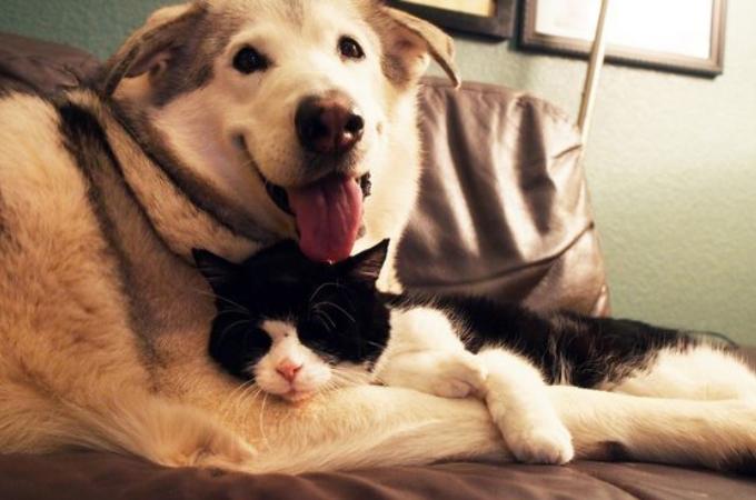 親友の猫を亡くした犬。悲しみのあまり、遠吠えをするようになるも、その悲しみを癒したのは4匹の子猫との出会いだった。