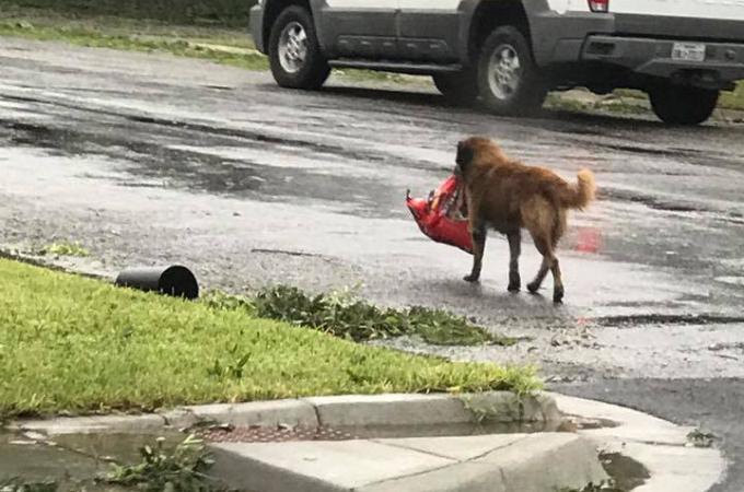 ハリケーンが迫るなか、安全を図りドッグフードを咥え歩く犬。災害対策のお手本としてSNSに投稿され称賛の声が相次ぐ。
