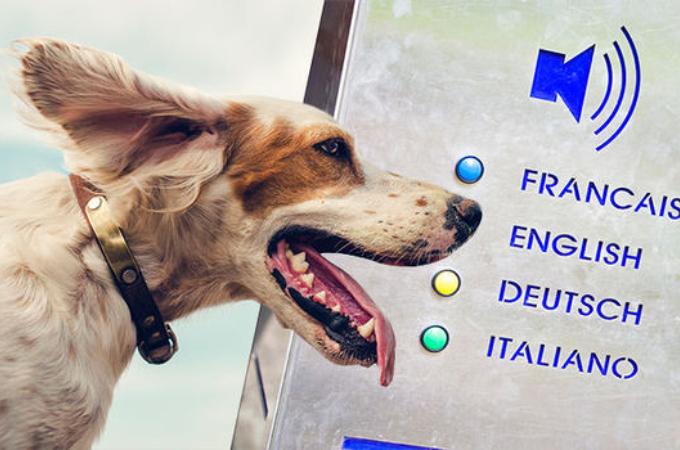 愛犬家必見!!10年以内に人間と犬が会話できるデバイスが誕生する?