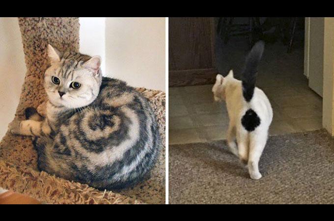 神様のイタズラ!?変わった模様を持つ個性あふれる猫たちを写した画像10選