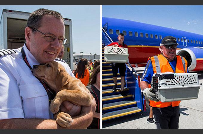 ハリケーンの影響で行くあてを失った多くのペットを救うため航空会社が手を差し伸べる