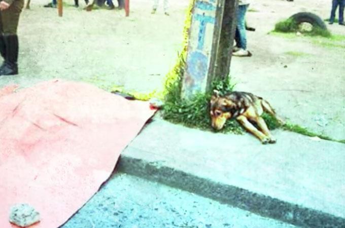 愛する飼い主さんを事故で失い道端に座ったままそばを離れようとしない犬