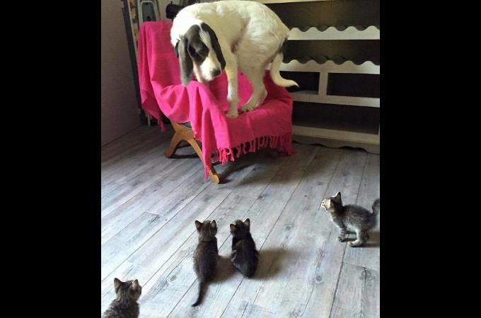 【前編】犬と猫を仲良く飼おうとして、結果的に上手くいかなかった例