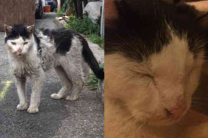 骨が浮き出るほどガリガリに痩せ細った猫に遭遇した女性。迷うことなく保護したその後とは。