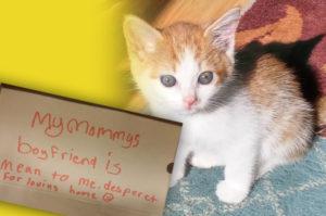 捨て猫に添えられた子供の字で書かれた手紙。その切ない内容に動かされた女性が行動を起こす。