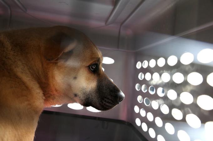 「ペットショップで販売できるのは、アニマルシェルターなどで保護されている犬や猫に限る」サンフランシスコで可決された新条例。