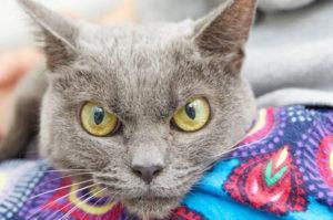 不機嫌そうな表情の高齢猫。その表情のせいで1年以上も家族と巡り会えない猫の本当の姿とは。