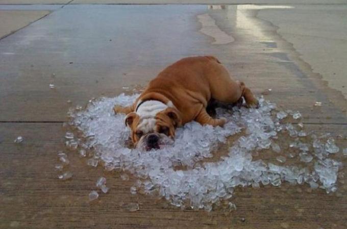 【画像】様々な方法で真夏の暑さをしのいできた動物たちの画像18枚