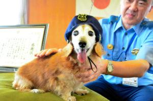 泥棒の侵入を知らせて現行犯逮捕に貢献した17歳の老犬ルーシー。富山県警から感謝状が送られる。