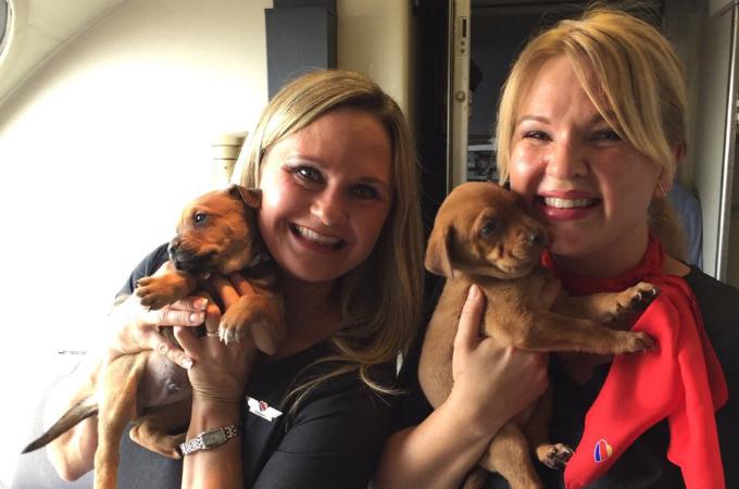 64匹の犬と猫が航空機に乗って笑顔で写真。その理由とは!