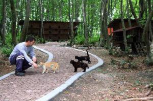 森の中で野良猫が幸せに暮らせる町「猫の町」。その町を作った人たちと、猫たちの暮らす風景とは。