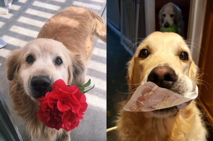 どこから持ってきたの!?飼い主に思わぬプレゼントをするペットの画像20選