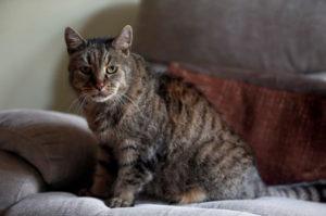 高齢猫のナツメグが32歳で生涯を閉じ、多くの人が悲しみに包まれ、メッセージを送る。