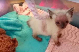 「エイリアン」の顔をした不思議な子猫。愛情をたくさん受け病気を克服する。
