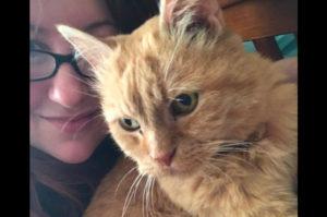 常に抱っこを要求し、答えなければ泣き出してしまう15歳の老猫。施設スタッフが見つけた解決策と、その後手に入れた幸せとは!