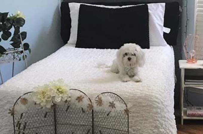 実家を出て新生活を始めた娘の部屋をたったの1ヶ月で愛犬の部屋へを変化させた母。その様子がこちら!