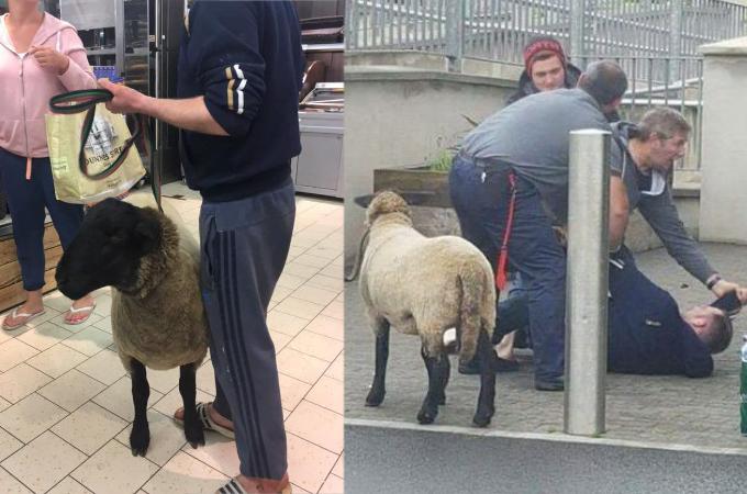 スーパーにペットである羊を連れて入店した男性。スタッフに入店拒否されると、激怒し警察を巻き込む騒動に発展する。
