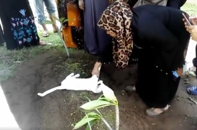 男性の葬儀に突如現れ、お墓から全く動こうとしない真っ白な猫。何をされても動こうとしない、この不思議な光景が話題に!