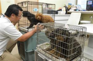 静岡県で88匹の小型犬を飼育していた女性が多頭飼いが困難になり救助を要請。そして、その後の犬たちは。
