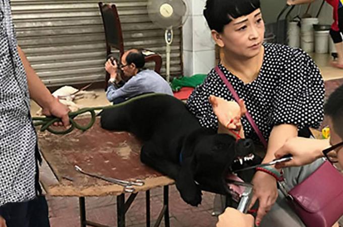中国の路上で犬の声帯切除手術を行うニセ獣医。格安料金に惹かれて飼い犬を連れてくる利用者が後を絶たない。