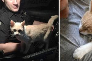 勤務中の警察官がパトカーのドアを開けると、そこに飛び込んできた猫。仲良くなりたそうにアピールする警察官がとった行動とは!