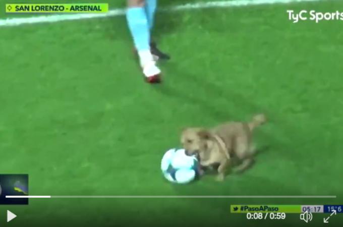 プロのサッカーの試合中に乱入した犬。プロ顔負けのドリブルを披露し、興奮冷めやらぬ犬がインタビューの時にとった行動とは!