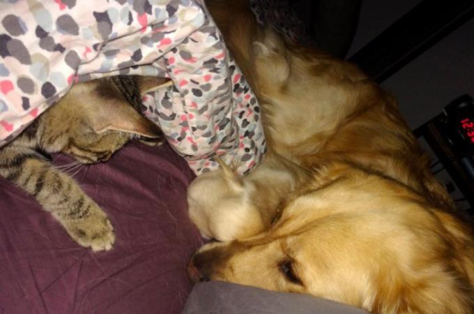大切な親友を失った犬。飼い主さんがある日、帰宅するとそこには信じられない光景が!