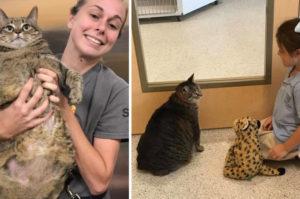 太りすぎて面倒が見れなくなったという理由で捨てられた通常の約3倍はある肥満猫。ある少女との出会いで運命を変える!