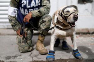 これまでに52人もの命を救ってきた救助犬。大統領が自身のツイッターでこれまでの活躍を称え、多くの人から称賛される!