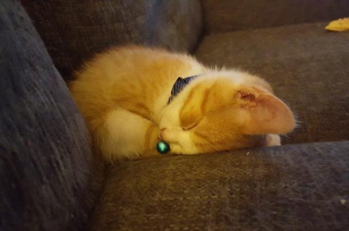 家の前で何日もお腹を空かせていた子猫。夫婦が家族として迎え入れ、獣医に診てもらうと、子猫にはある特徴が!