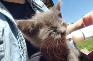目ヤニだらけで目がうまく開かない状態だった子猫を保護した一家。シェルターに引き渡す予定が思わぬ方向に!