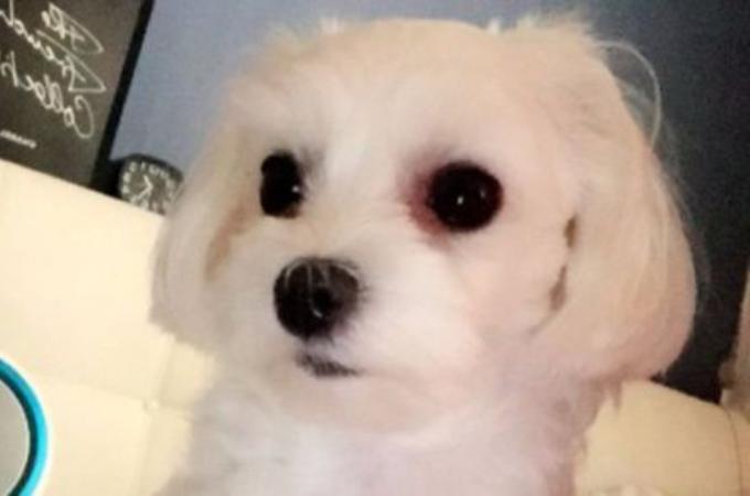 旅行のため、預けた動物病院でミスによって安楽死させたれた愛犬。さらに言い訳をする病院に飼い主は激怒。