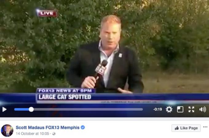 危険な動物が出現!ニュース番組でリポーターが中継し、カメラがズーム。そして、そこに映し出された動物にネットでは大騒ぎ!