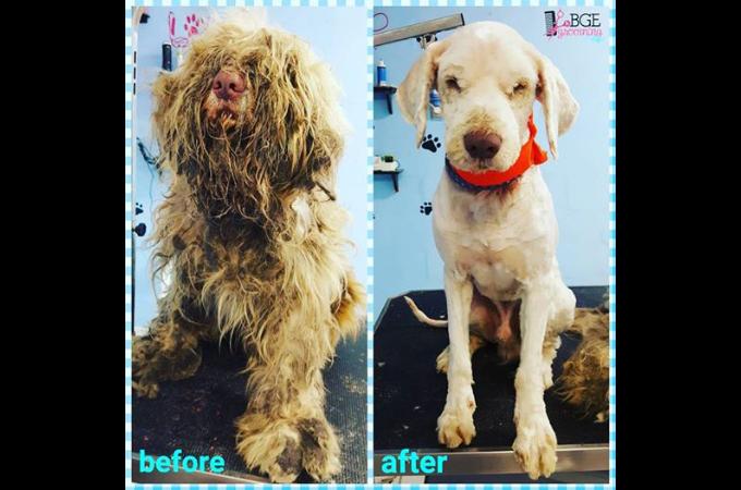 飼育放棄され死臭を漂わせて彷徨っていた盲目の犬。SNSの投稿を目にしたトリマーが奇跡の変身を遂げさせる。