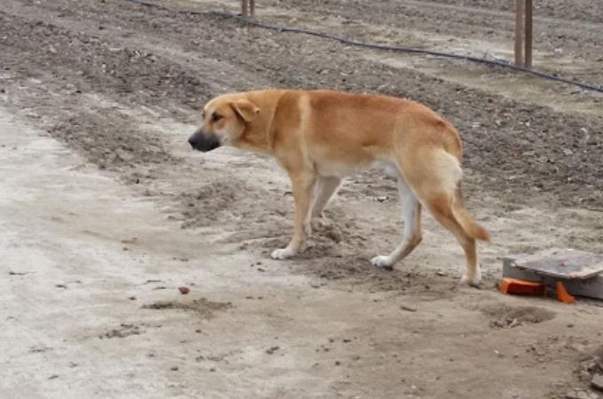 飼い主に「待て!」と命令されたまま、捨てられた犬。飼い主を信じ待ち続けるその姿に胸が痛くなる。