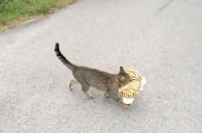 隣人の家からぬいぐるみを借りてきてルンルン気分で運ぶ猫。そして、自宅の庭でとった行動とは!