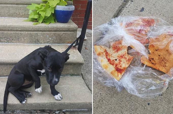ノートを破いて書いた手紙と食べ残しのピザと一緒に捨てられた子犬。発見した男性がとった行動と、その後とは。