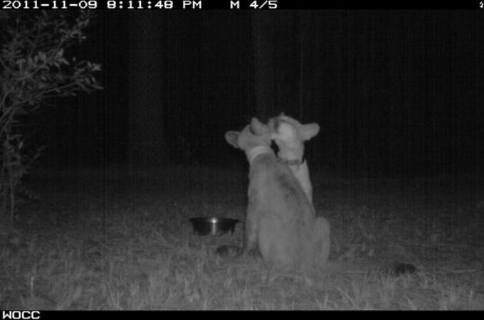 暗闇の中で生活をしている動物たちを隠し撮りした写真20枚!