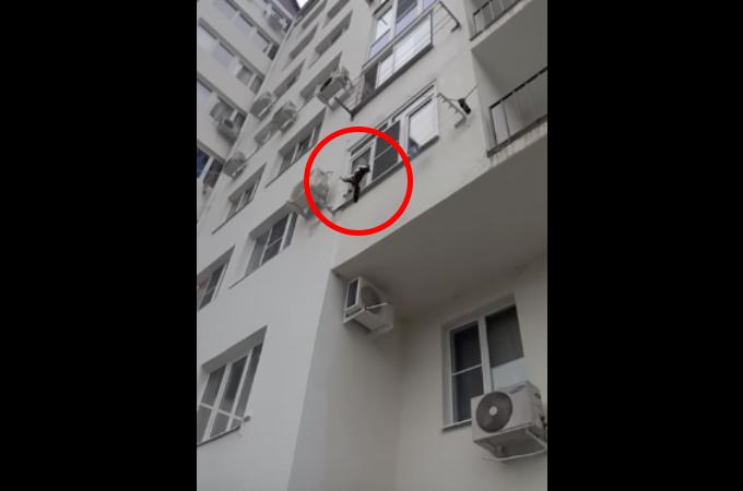 マンションの3階から落ちそうな猫を発見した男性。とっさの判断で猫を救った男性の行動とは。