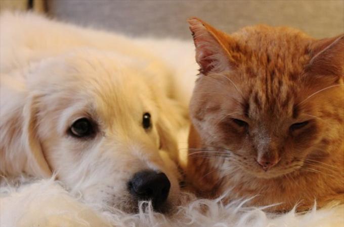 新しく家族の一員となった犬。警戒する先住猫に避けられながらも、ひたむきに努力し続けた結果!