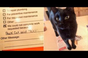自宅のメンテナンスを業者に依頼した女性。作業後のメモに「黒猫が「NO」と言ったから仕事できませんでした」の文字が!