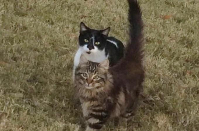 親子の野良猫を保護しようとする女性。子猫はすぐ保護できるも母猫は1年かかりようやく保護。すると翌日驚きの光景が!