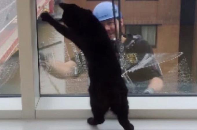 毎週現れる窓拭きおじさんが来るのを今か今かと待つ猫。そして、窓を拭きが始めるとる可愛い行動がこちら!