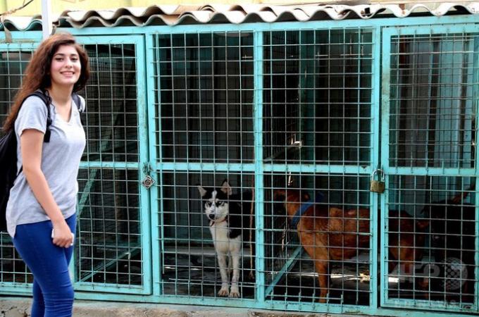 動物が虐待されているのに苛立ちを募らせた女性大生。SNSでの里親探しを開始し、これまでに25匹のもらいてを見つける。