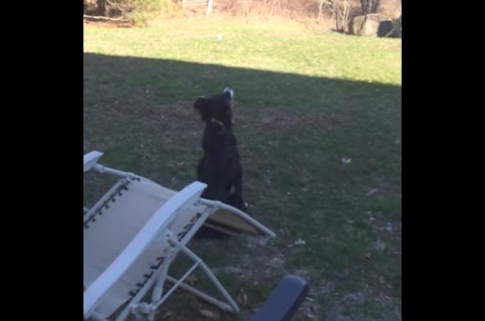 空に投げたボールが落ちて来ないのをいつまでも見続ける犬の姿に「可愛い!」の声が続出!その真相とは!