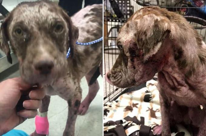 目を覆いたくなるほど酷い状態でゴミ箱に捨てられた犬。虐待による生傷に胸が痛む。