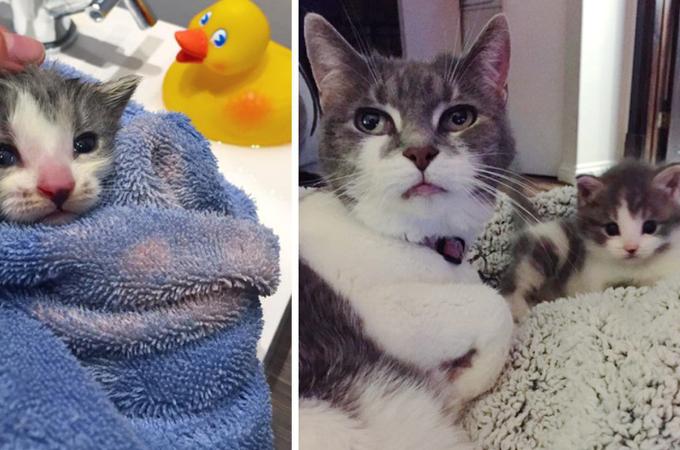 母猫がいない生まれたばかりの子猫。一時預かりの家に住むおばあちゃん猫と出会い、愛情をもらい成長する。
