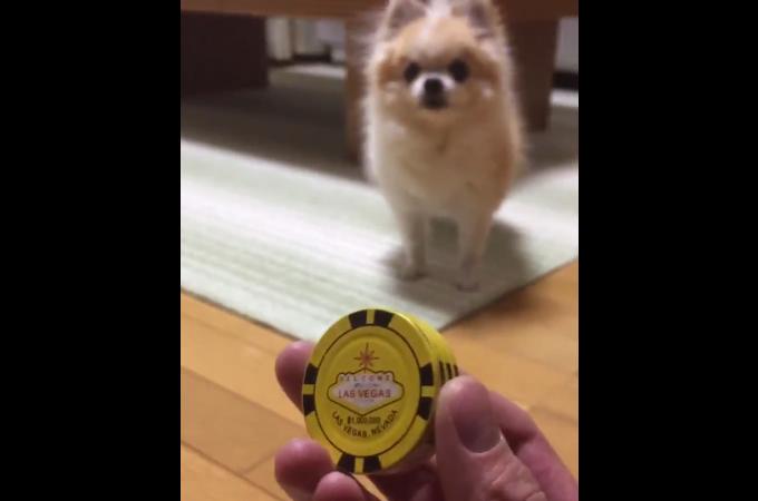「お土産にもらったライターがカッコイイ」として動画を投稿すると、ユーザーからは「カワイイ!」の反応が!
