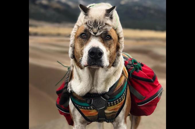 保護犬と保護猫を引き取った女性。すると、旅行好きの犬と猫に大変身!種を超えた友情に多くのファンがつく!
